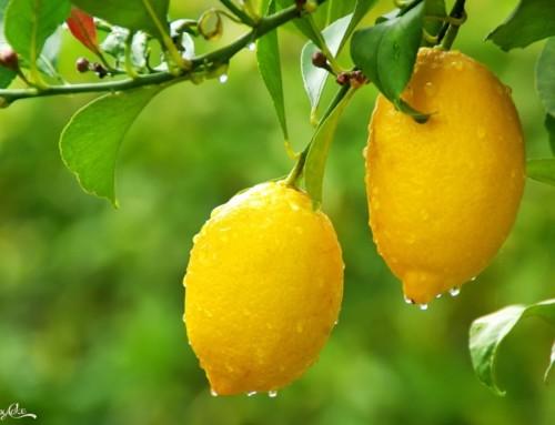Tutti gli utilizzi del limone in cucina